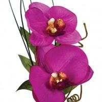 Орхидея с ваза - La Maison